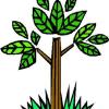 Ботаническа характеристика на баклата