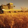 Агротехника за ориза
