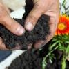 Почва за цветя отглеждани в саксия