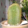 Кактусова градина у дома