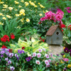 10 Най-често срещаните градинарски Грешки