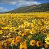 Лечебни  цветя и билки, против простуда