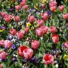 Почви и начини на засаждане – цветя и растения