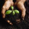 Свързаност на почвите