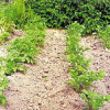 Обемна плътност на почвите