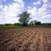 Реактивност на почвите