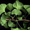 Устойчивост на растенията към недостиг на кислород