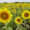 Растеж и развитие на растенията