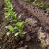 Лепливост на почвите