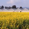 Биологични изисквания на захарното цвекло