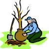 Ботанически особености на нахута