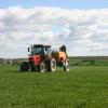 Систематика и сортове на ориза
