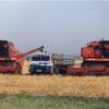 Особености в разтежа и развитието на картофите