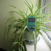 Как да осигурим необходимата влага за нашите растения
