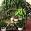 Грижи за растението през периода на покой