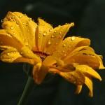 flower-031