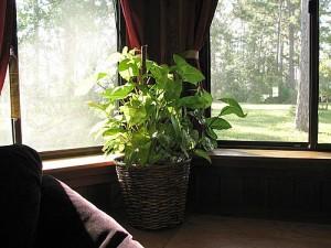 indoor-plants-1-main_Full